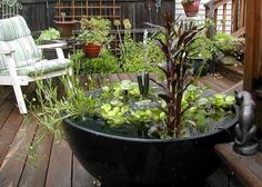 Container water gardens are easy to design and maintain, making them a perfect low-cost accessory to your outdoor living spaces. Learn how to make a container water garden!