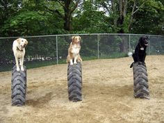 Buried semi or tractor tires for puppy play time! This is easy to do! - Very realistic idea for North Loop Dog Backyard, Dog Playground, Playground Ideas, Dog Yard, Dog Run Side Yard, Doki, Pet Resort, Puppy Play, Dog Daycare