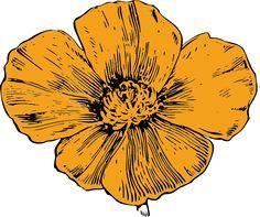 Image result for california poppy line botanical line drawing