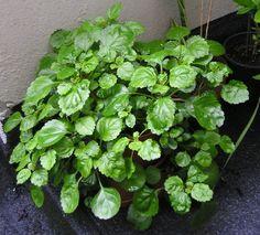 1000 images about plantas on pinterest interiors - Plantas para exterior ...