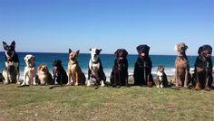 En el siguiente vídeo conocerás a los perros más