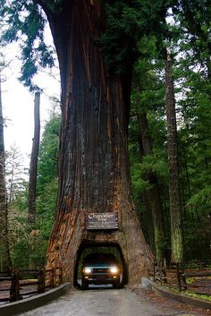 "Bucket List: Drive and hike through the ""Avenue of the Giants"" in Humbolt County, CA. Hug a giant redwood tree and drive through one too.   The Redwoods on the CA coast are the tallest trees in the world. Over 100 metres tall, with trunks up to 8 metres in diameter. Some have been around since before the time of Jesus.   Drive through the ""Chandelier Tree"" (maximum age: 2,400 years) of Drive-Thru Tree Park in Leggett, California."