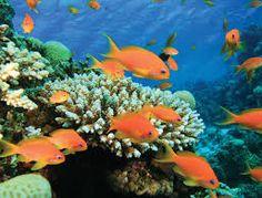 El Mar Rojo Egipto los peces de colores maravillosos y los corales unas de las playas mas bellas en el mundo......