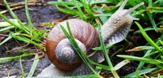 Keep slugs and snails away from your garden with these natural pesticides. Plants, Nature, Natural Pesticides, Organic Gardening, Organic Vegetable Garden, Garden Guide, Getting Rid Of Slugs, Slugs, Garden