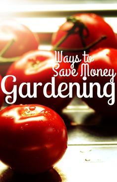 Easy ways to save money on your garden. If you want to have a frugal garden you need to check out these tips!