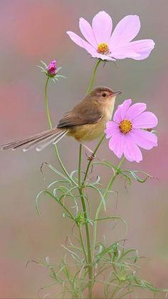 Photography nature flowers sun New Ideas Cute Birds, Pretty Birds, Beautiful Birds, Animals Beautiful, Beautiful Butterflies, Pretty Flowers, Beautiful Pictures, Beautiful Flowers Wallpapers, Beautiful Nature Wallpaper