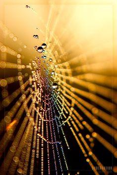 wet web natures-wonders