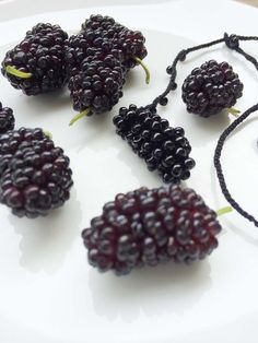 mulberry & mulberry