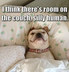 Silly human.  Beds are for dogs!