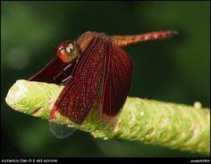 Robin Wong: Olympus OM-D E-M5 Review: Butterfly Park, KL