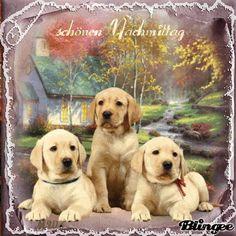 Animiertes Gif, Animation, Good Afternoon, Labrador Retriever, Puppies, Dogs, Animals, Facebook, Petra