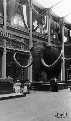 1894 ,  Field Museum