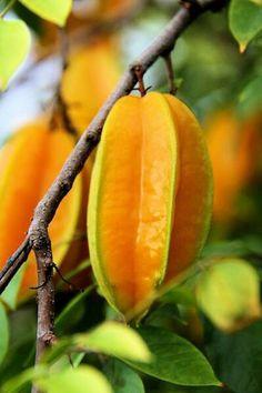 Carambola: La carambole pousse dans des régions tropicales. C'est le fruit du carambolier. La carambole mûre est de couleur jaune orangé. Le fruit coupé prend la forme d'une étoile. La carambole a un goût acidulé. On l'utilise en cuisine dans des salades de fruits, des jus, des confitures, des sauces…