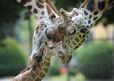 嫌なこと忘れられそうなかわいい動物画像