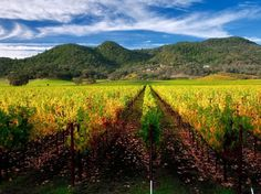 Napa, CA -- Named one of the Top 10 Cities in the United States -- Condé Nast Traveler Readers' Choice Awards 2013