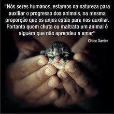 Chico Xavier- Animais