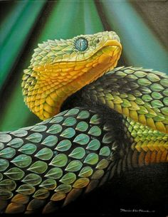 Atheris is a genus of venomous vipers found only in tropical subsaharan Africa, excluding southern Africa. Confined to rain forest areas, many members have isolated and fragmented distributions snake Pretty Snakes, Beautiful Snakes, Nature Animals, Animals And Pets, Cute Animals, Beaux Serpents, African Bush Viper, Beautiful Creatures, Animals Beautiful