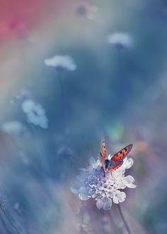 butterfly nature  ~ * ~ Photo by JULIANA_NAN