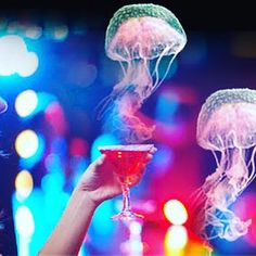 Shake up your #weekend plans and come enjoy the #TroubleWithJellyfish followed by drinks @CafeArtScience tonight & tomorrow!  #friday #todo #event #attraction #exhibit #exhibition #free #drink #drinks #cafeartscience #cafe #artscience #artsci #art #science #cambma #kendallsq #kendallsquare #cocktail #jellyfish #jellies by lelabcambridge December 18 2015 at 12:40PM