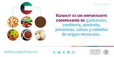 Kuwait es un importante comprador de garbanzos, confitería, pimienta, pimientos, salas y cebollas de origen mexicano. SAGARPA SAGARPAMX #MéxicoAgroPotencia