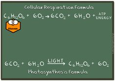 Cellular respiration vs. photosynthesis GIF by the Amoeba Sisters