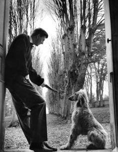 French fashion designer Hubert de Givenchy with his afghan hound. Original Publication: Picture Post - White Is Right Original Publication: People Disc - Get premium, high resolution news photos at Getty Images Images Vintage, Afghan Hound, Hubert Givenchy, Vogue Ukraine, Lurcher, Bedlington Whippet, Hound Dog, Black White, Funny Dogs