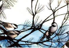 Chickadees...one of my favorites.