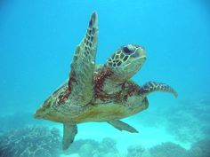 Turtle – Species Information and Gallery | Take a Quick Break