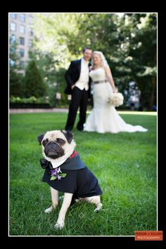 Majorly cute pup captured by Person+Killian Photography //Boston Wedding Photography, Boston Event Photography, Wedding with Dogs, Wedding Portrait with Dog, Couple with Dog, Animal Photography