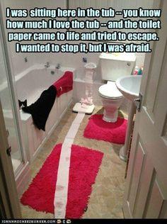 true story #cats #kittens #funny