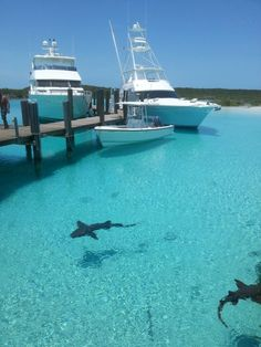 Bahamas minus sharks of course!