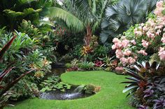 note how the curved shape of the pond make this fantastic garden even more interesting to gaze at.