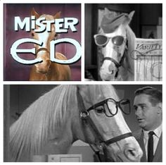 A horse is a horse of course, of course unless that horse of course is Mr.ED!!!!