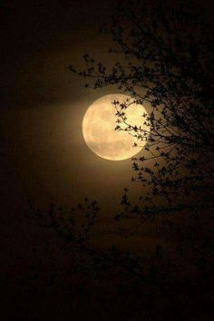 Never look at the full moon through trees. Never point your finger at the moon. Moon Through The Trees. Moon Dance, Shoot The Moon, Moon Moon, Good Night Moon, Beautiful Moon, Trees Beautiful, Beautiful Places, Moon Magic, Super Moon