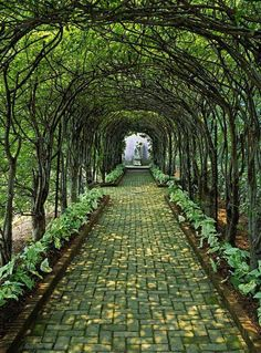 Pleached allee, Glen Burnie Historic Home & Gardens; Ron Blunt photo
