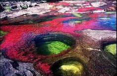Amazing river! Cano Cristales in Columbia