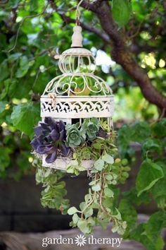 Turn a birdcage into a hanging basket planter with a few simple modifications and the addition of gorgeous plants. Succulents are perfect for a project like this because they are drought tolerant and have so much variety in their shapes, sizes, and growing habits.