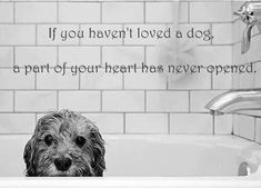 This is so true, because dogs have unconditional love! ♥♥♥♥♥♥