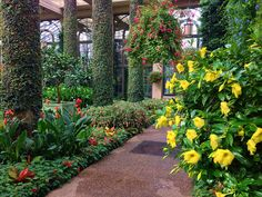 Allamanda, Fuchsia, Canna 'Aloha' | Flickr - Photo Sharing!