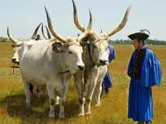 """Csikósok és szürkemarhák - wranglers living on Hortobágy,  a national park in Eastern Hungary, rich with folklore and cultural history. The park, is a part of the Alföld (Great Plain).  The animals are called """"Szürkemarha"""", in english: hungarian grey cattles."""
