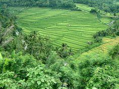 Bali ...