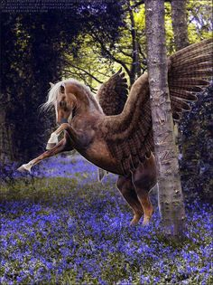 This mighty Pegasus is so grand and lovely! Mythical Creatures Art, Mythological Creatures, Magical Creatures, Fantasy Creatures, Pegasus, Most Beautiful Horses, Pretty Horses, Winged Horse, Unicorn Art
