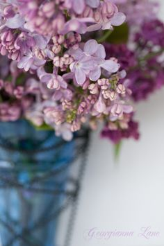 Paris Gardens and David Austin Roses from Garden Photo World: Syringa: New Lilac Collection!