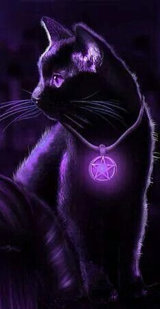 Gypsy Moon's Enchanted Chronicles cat with purple lighting effects; coll… Gypsy Moon's Enchanted Chronicles cat with purple lighting effects; I Love Cats, Cute Cats, Gypsy Moon, Purple Cat, Neon Purple, Purple And Black, Cute Animal Drawings, All Things Purple, Warrior Cats