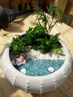 My sea scape fairy garden