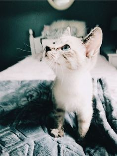 ✰P I N T E R E S T : alexandra_lovee✰ #cutestpuppiesonearth Animals And Pets, Baby Animals, Cute Animals, Gatos Cats, Paws And Claws, Puppy Care, Cute Creatures, Dog Photos, Crazy Cats