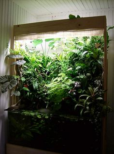from reverieaquatique.over-blog.com   I'm wondering how old this paludarium is- not brand new, but pretty crowded.   I'd also love to know about the lighting.