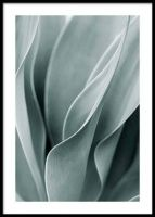 Stylish posters with botanical prints of colorful plants. Buy botanical posters online from Desenio. Nature Posters, Love Posters, Art Posters, Floral Posters, Poster Shop, Print Poster, Agaves, Poster 40x50, Color Verde Claro