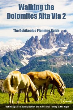 Dolomites Alta Via 2 - possibly the most beautiful hike in the world. This Planning Guide explains how to do it. Weather In Italy, Italy Culture, All About Italy, Riverside Walk, Hiking Europe, San Pellegrino, Visit Italy, Northern Italy, Day Hike