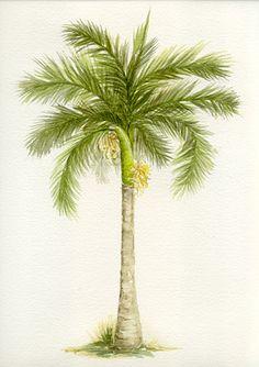 royal palm <3